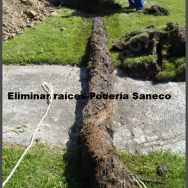 Extracción de raíces de tuberías